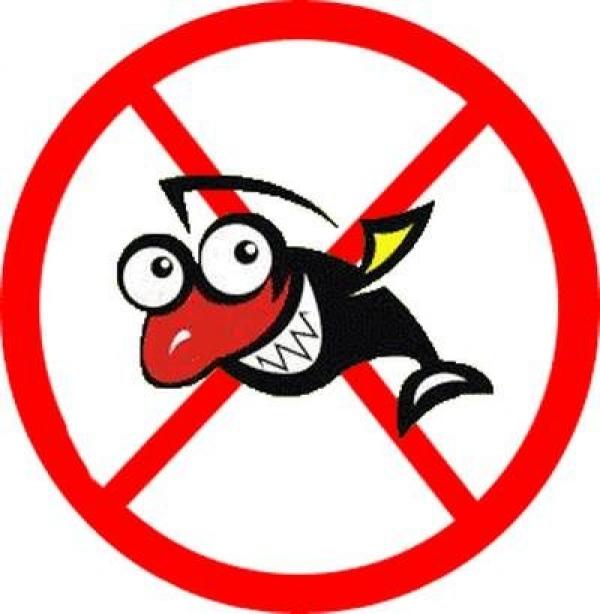 когда запрещено ловить рыбу в спб